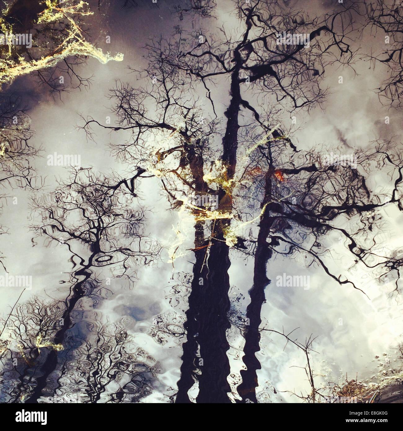 La riflessione di alberi di pino, America, STATI UNITI D'AMERICA Immagini Stock