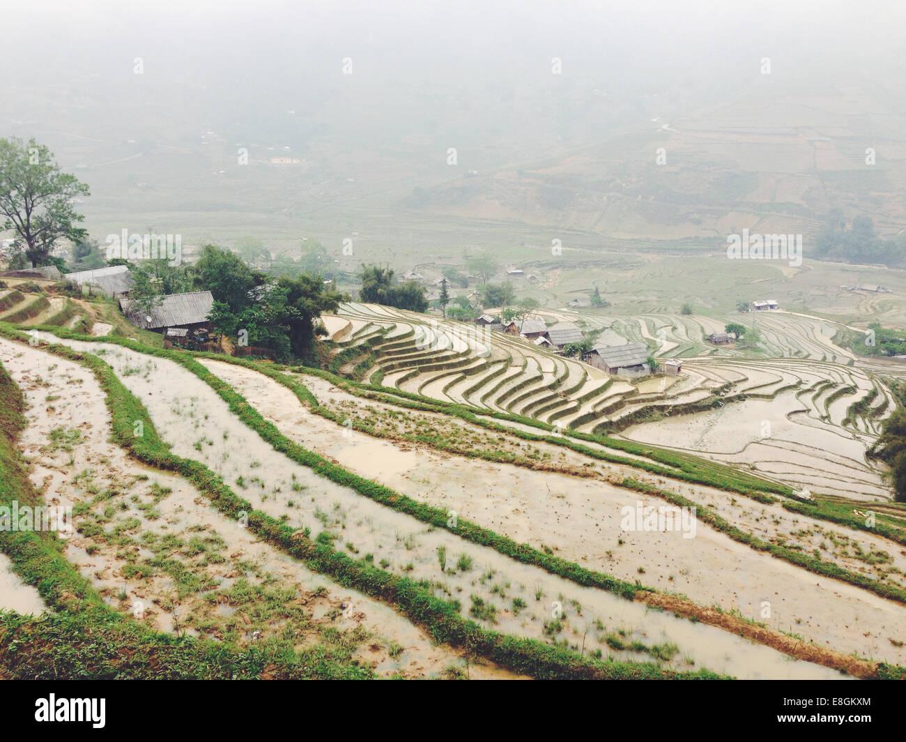 Il Vietnam, Lao Cai Provincia, Sa Pa, paesaggio tipico dell'agricoltura vietnamita Immagini Stock
