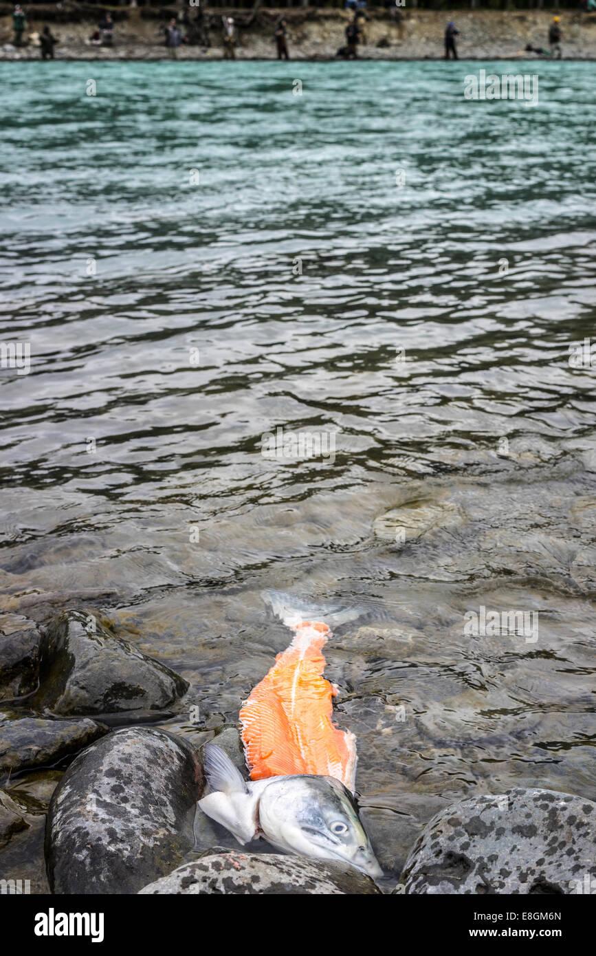 Russian stock photos russian stock images alamy for Cabine del fiume kenai soldotna ak