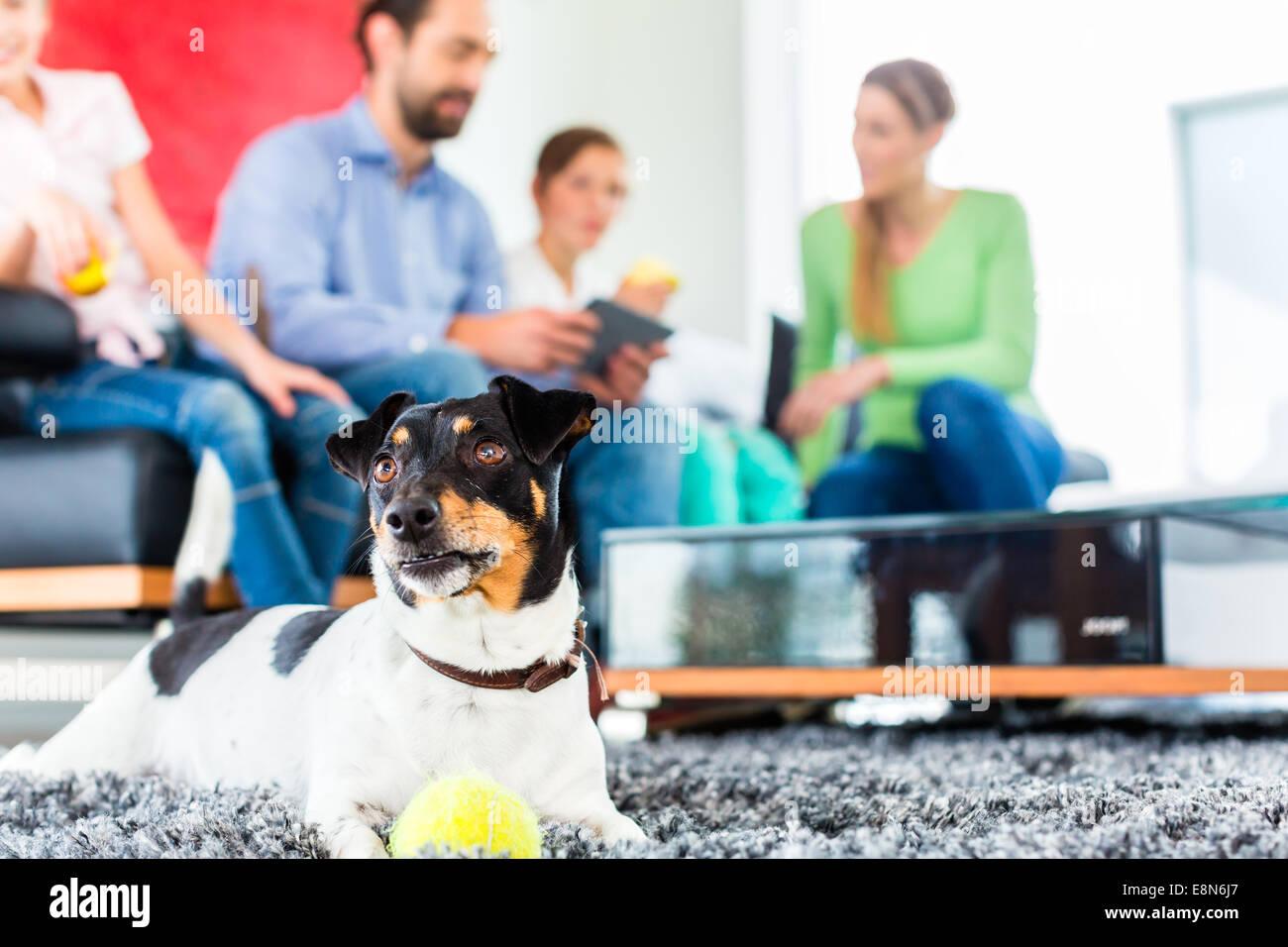 Jack Russel Terrier giocando con sfera in soggiorno famiglia seduti ...