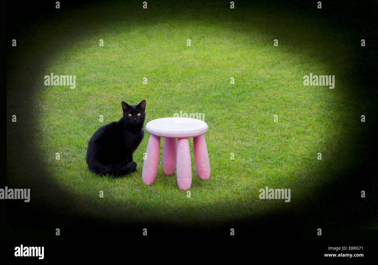 Gatto nero si siede con sgabello rosa foto immagine stock