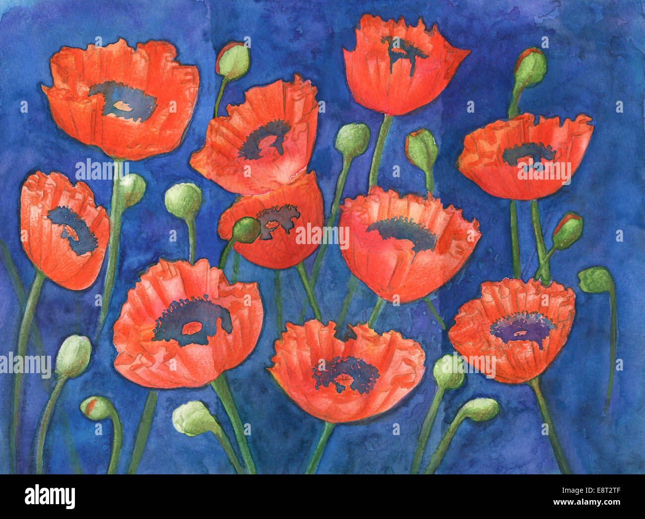 Papaveri rossi e gemme di colore verde sul blu, Originale acquerello e gouache pittura Immagini Stock