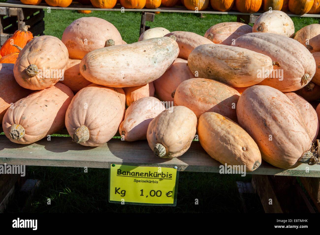 Banana Squash, Immagini Stock