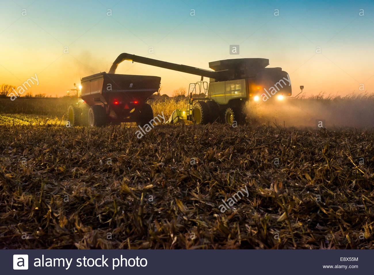 Un agricoltore coclee raccolte giallo mais granella da una mietitrebbia in un carro del grano durante la mietitura Immagini Stock