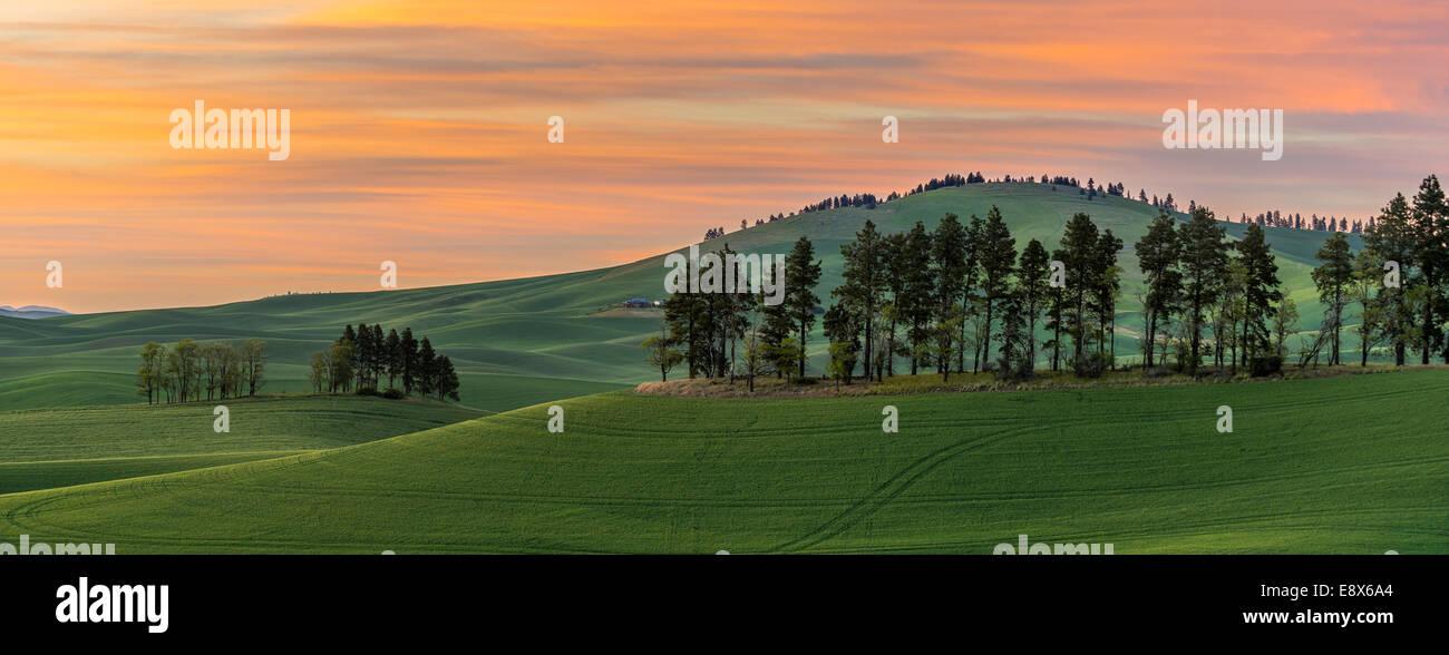 Whitman County, WA: Tramonto su dolci colline della regione di Palouse Immagini Stock