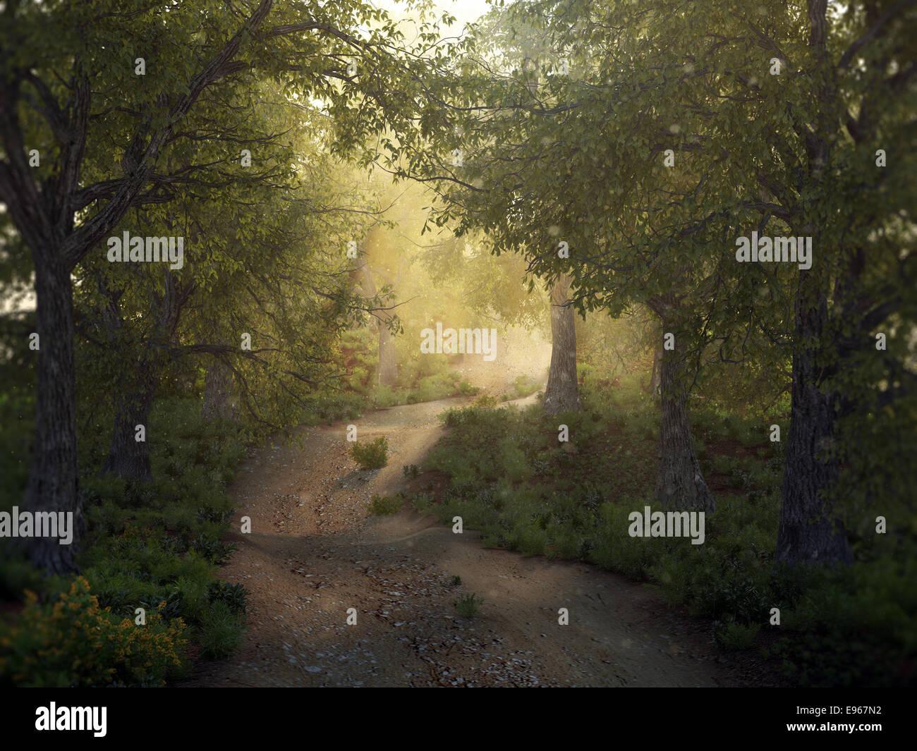 Il sole in una foresta di mysty Immagini Stock