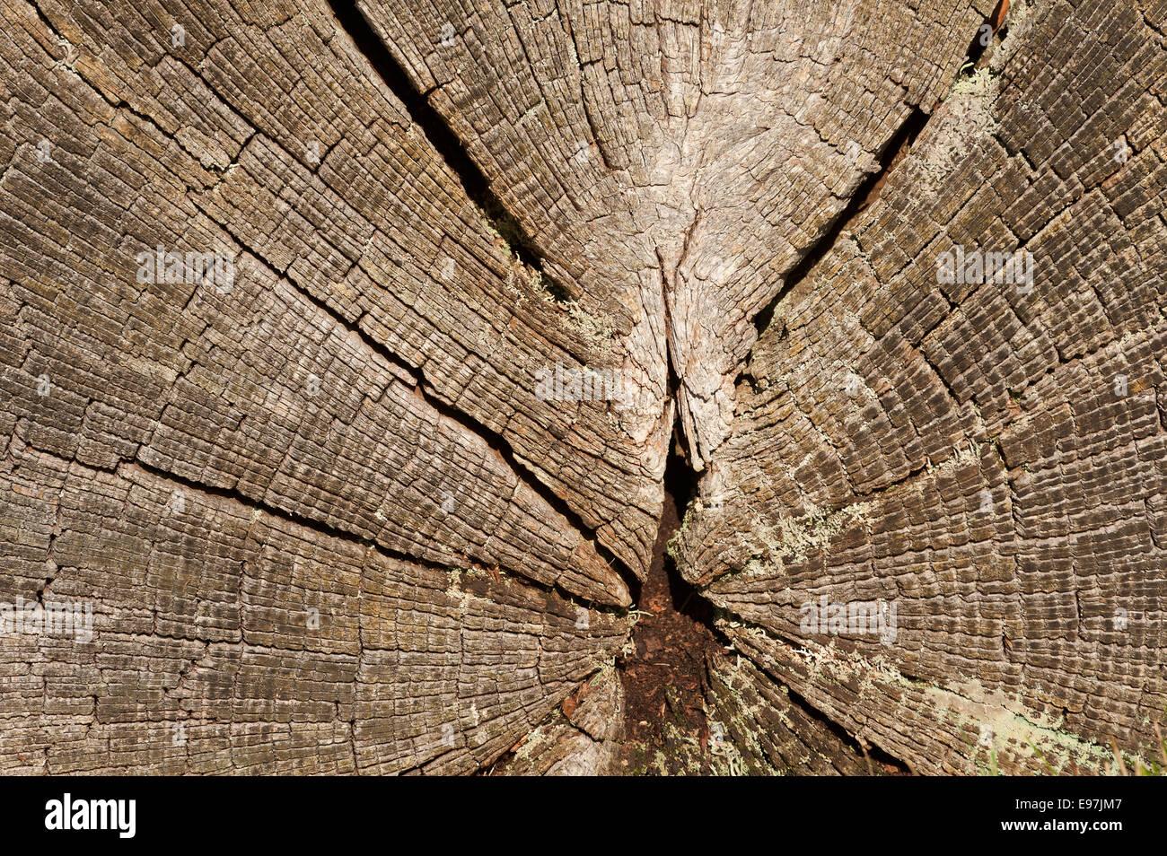 anello albero datazione 14-16 sito di incontri
