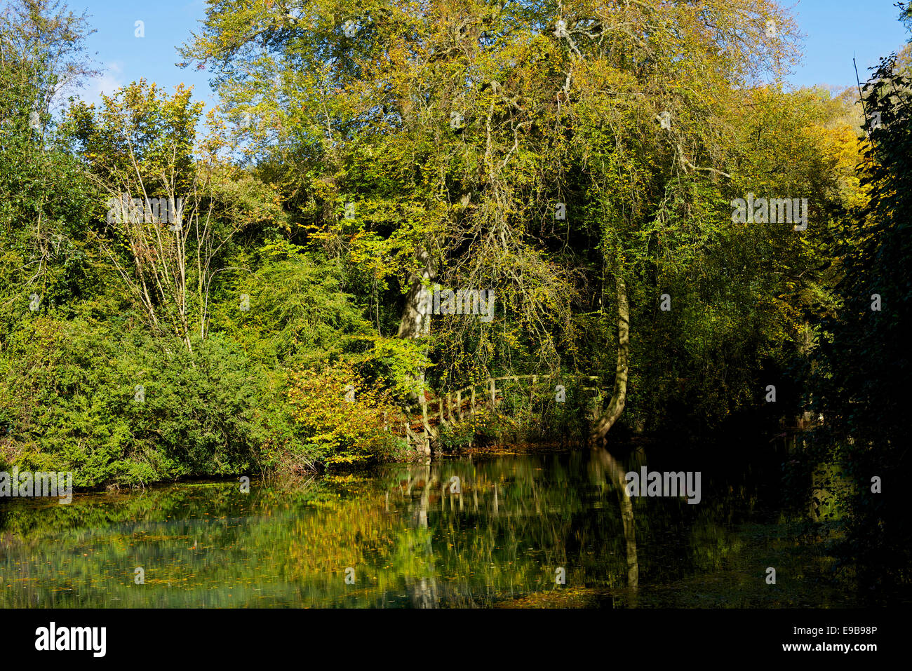 Piscina silenzioso, vicino al villaggio di Shere, Surrey, Inghilterra, Regno Unito Immagini Stock