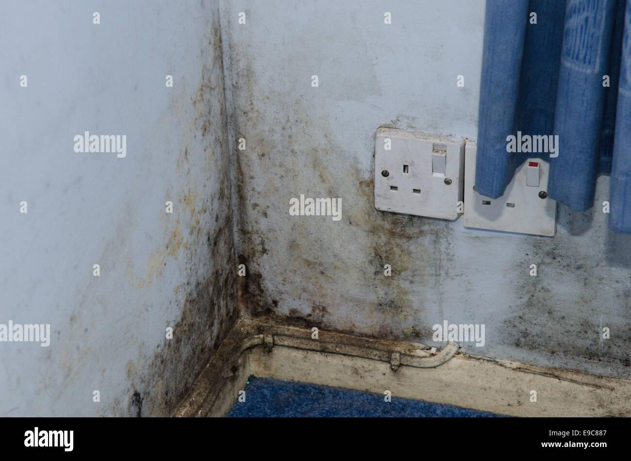 Muffa sulla parete umida nella camera da letto di beni in ...