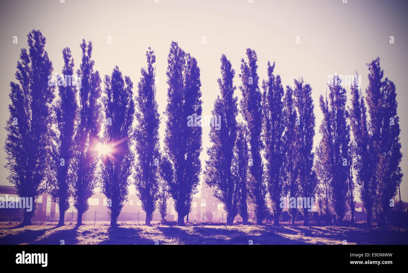 Vintage immagine filtrata di alberi in una fila. Immagini Stock