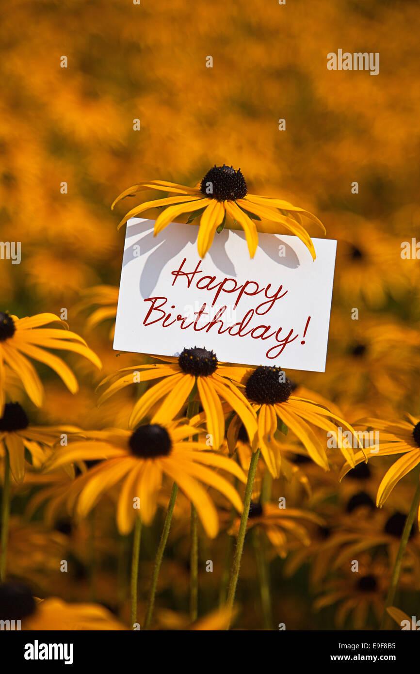Buon Compleanno In Un Campo Di Fiori Foto Immagine Stock