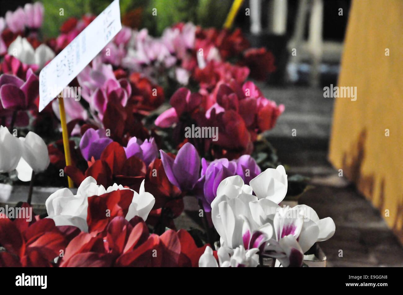 fiori di bellezza Immagini Stock