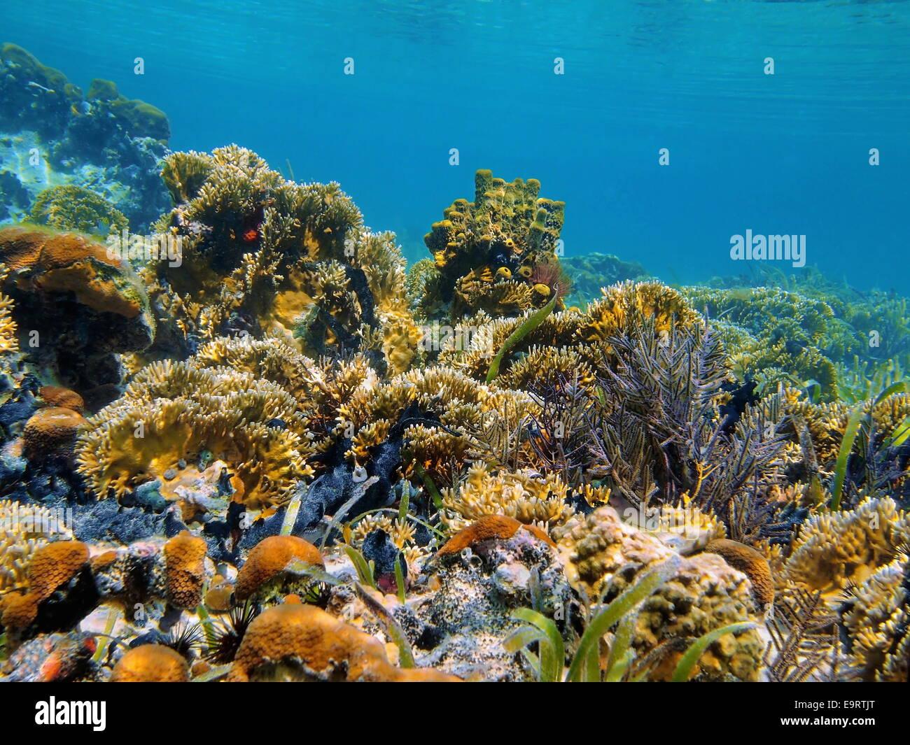 Paesaggio sottomarino in una leggera barriera corallina del Mar dei Caraibi Immagini Stock