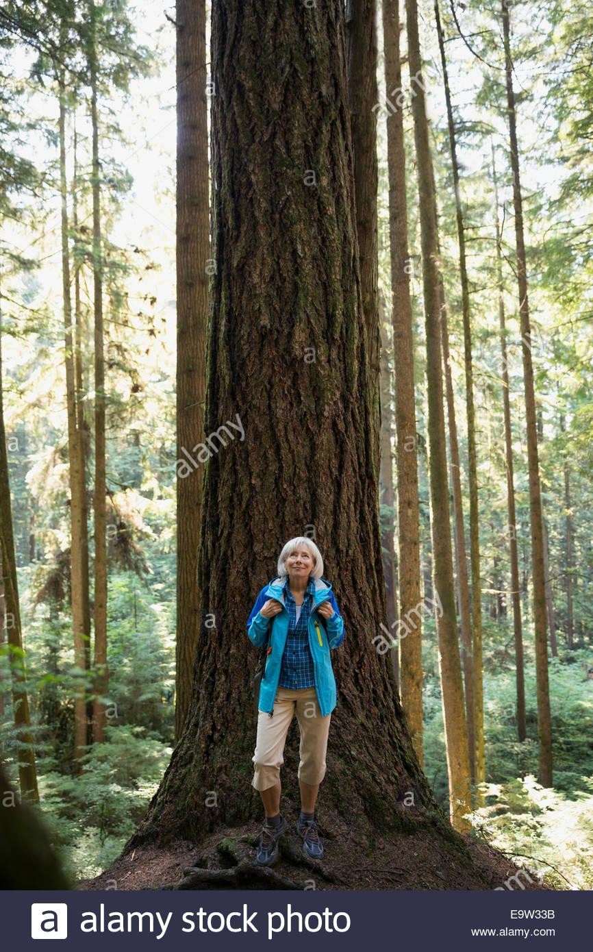 Senior donna guardando verso l'alto degli alberi nei boschi Immagini Stock