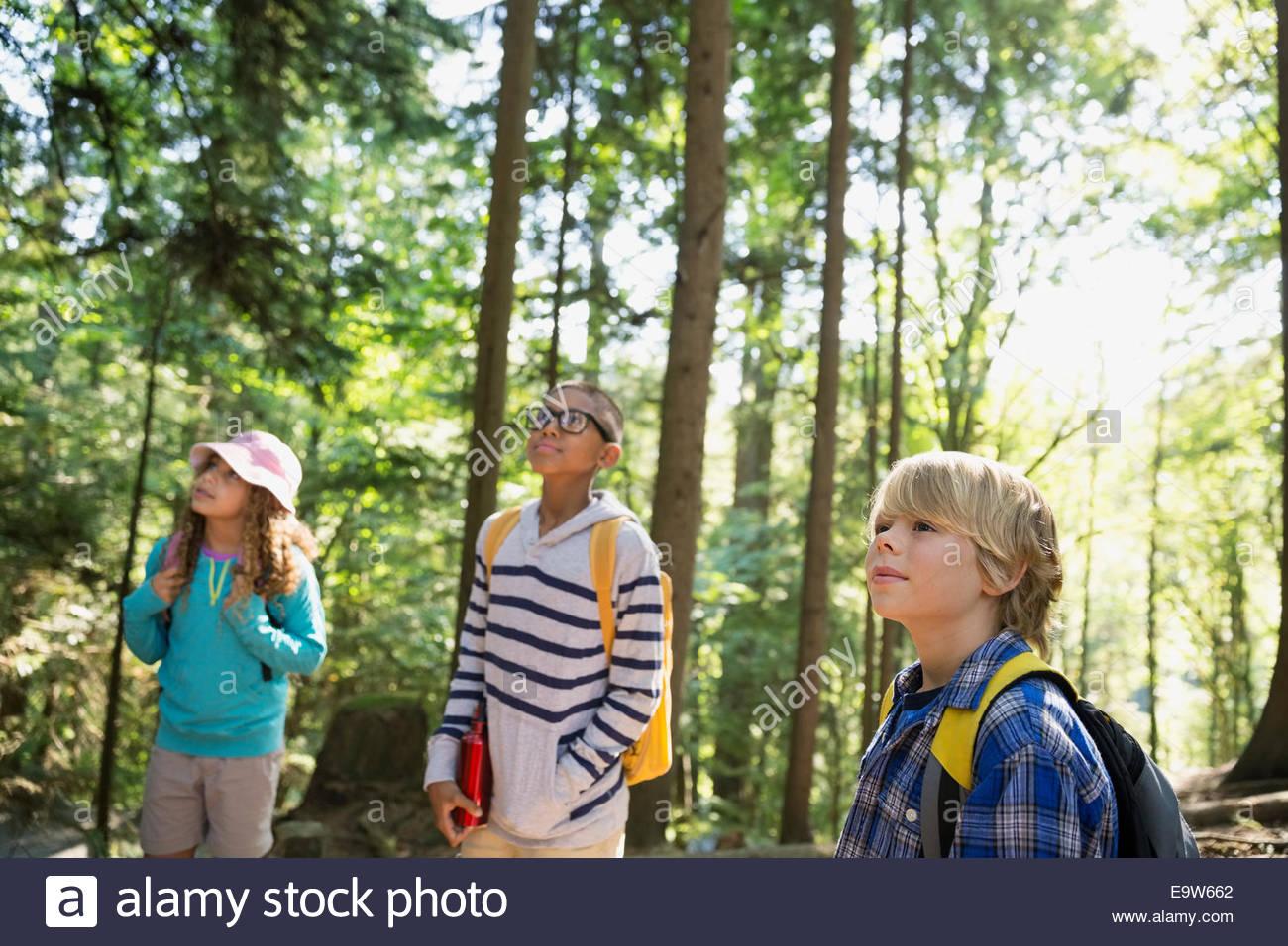 I bambini guardando verso l'alto degli alberi nei boschi Immagini Stock