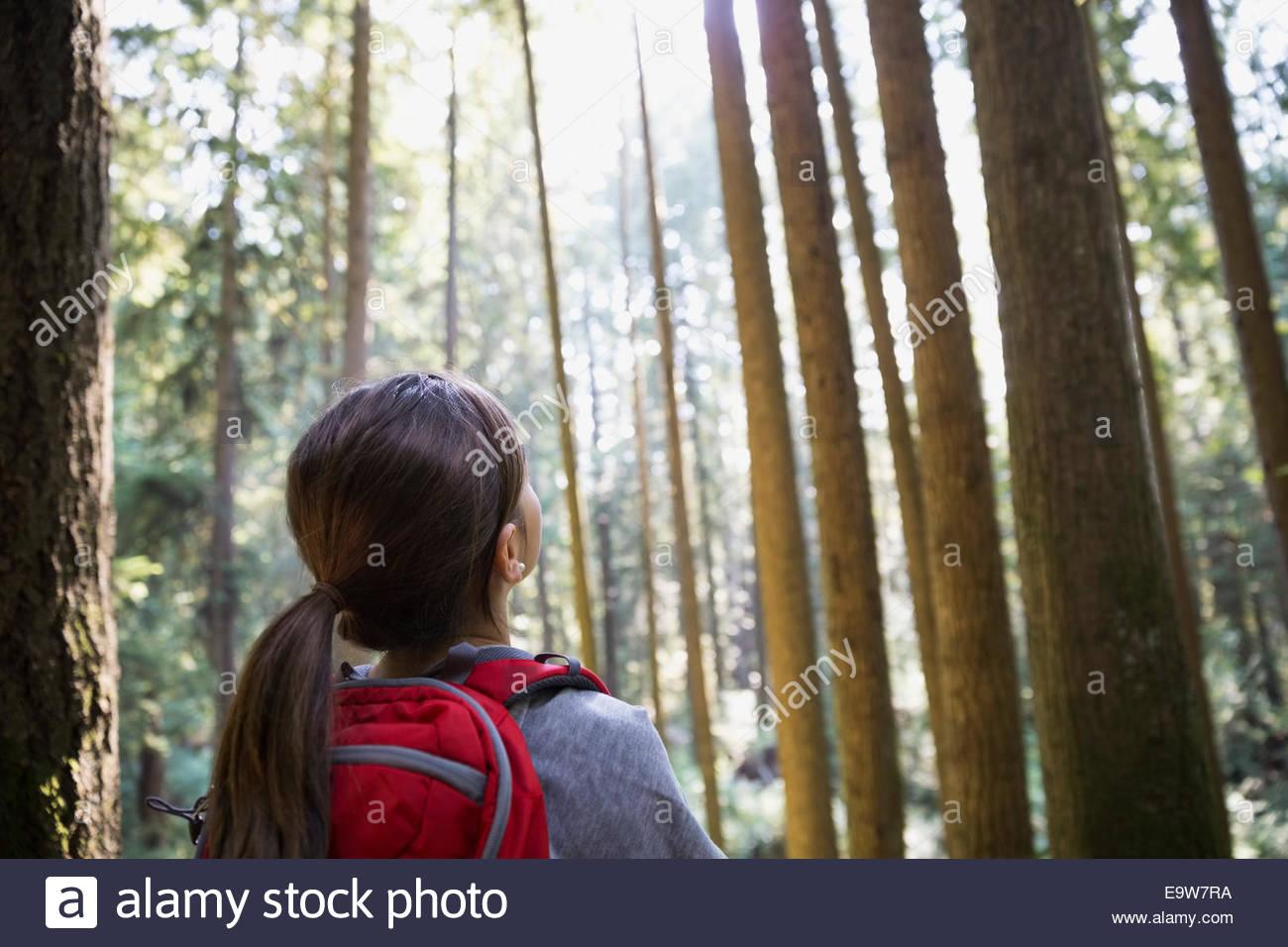 Ragazza cerca fino ad alberi di alto fusto in boschi Immagini Stock