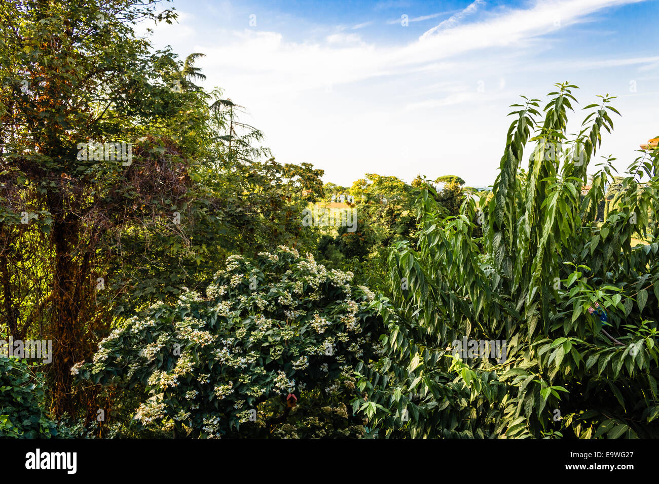Immagini Di Piante E Alberi fiori bianchi, erbe infestanti verdi, foglie di piante e