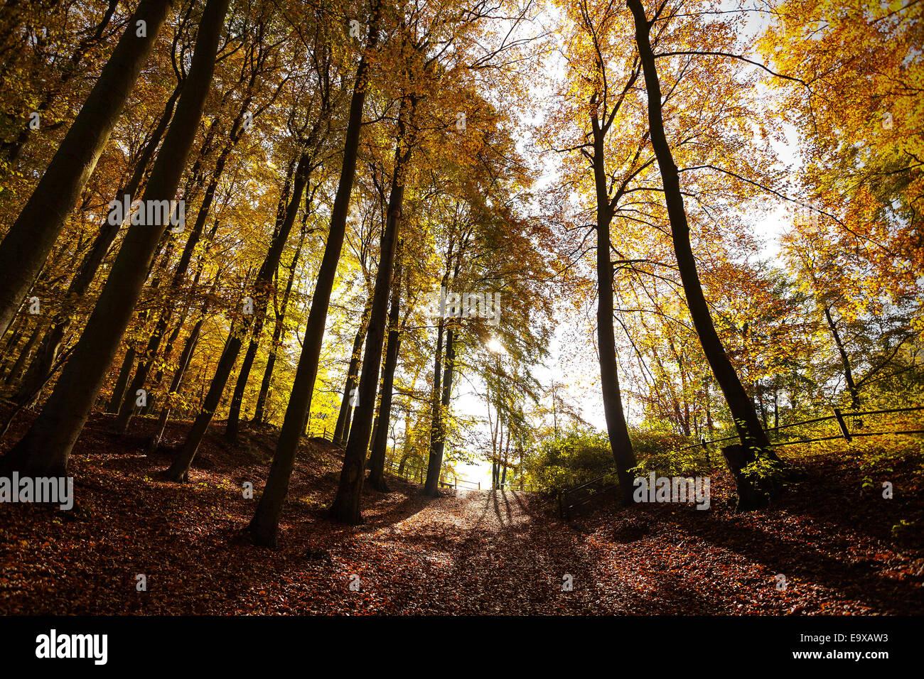 Autunno misterioso paesaggio forestale. Immagini Stock