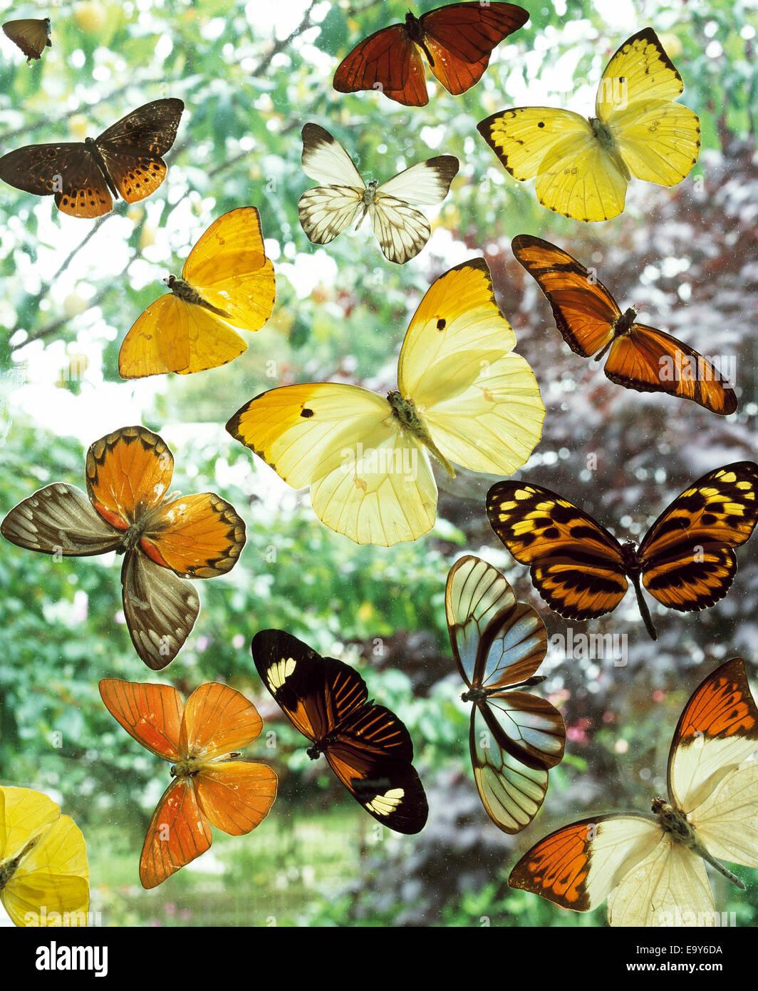 Varie le farfalle Immagini Stock