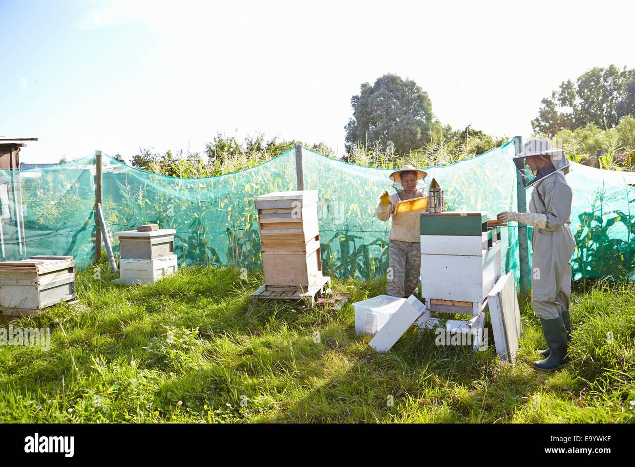 Due donne gli apicoltori lavorando sulla città di assegnazione Immagini Stock
