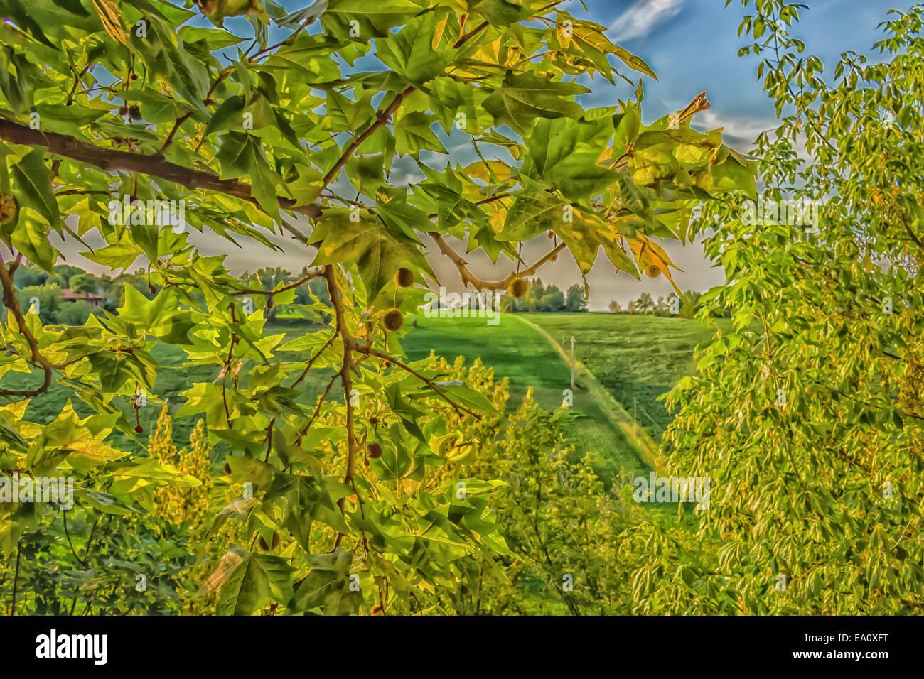 Immagini Di Piante E Alberi fiori, erbe infestanti verdi, foglie di piante e alberi su