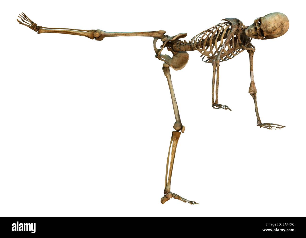 3D rendering digitali di uno scheletro umano in un mawashi-geri gari arti marziali posizione isolata su sfondo bianco Immagini Stock
