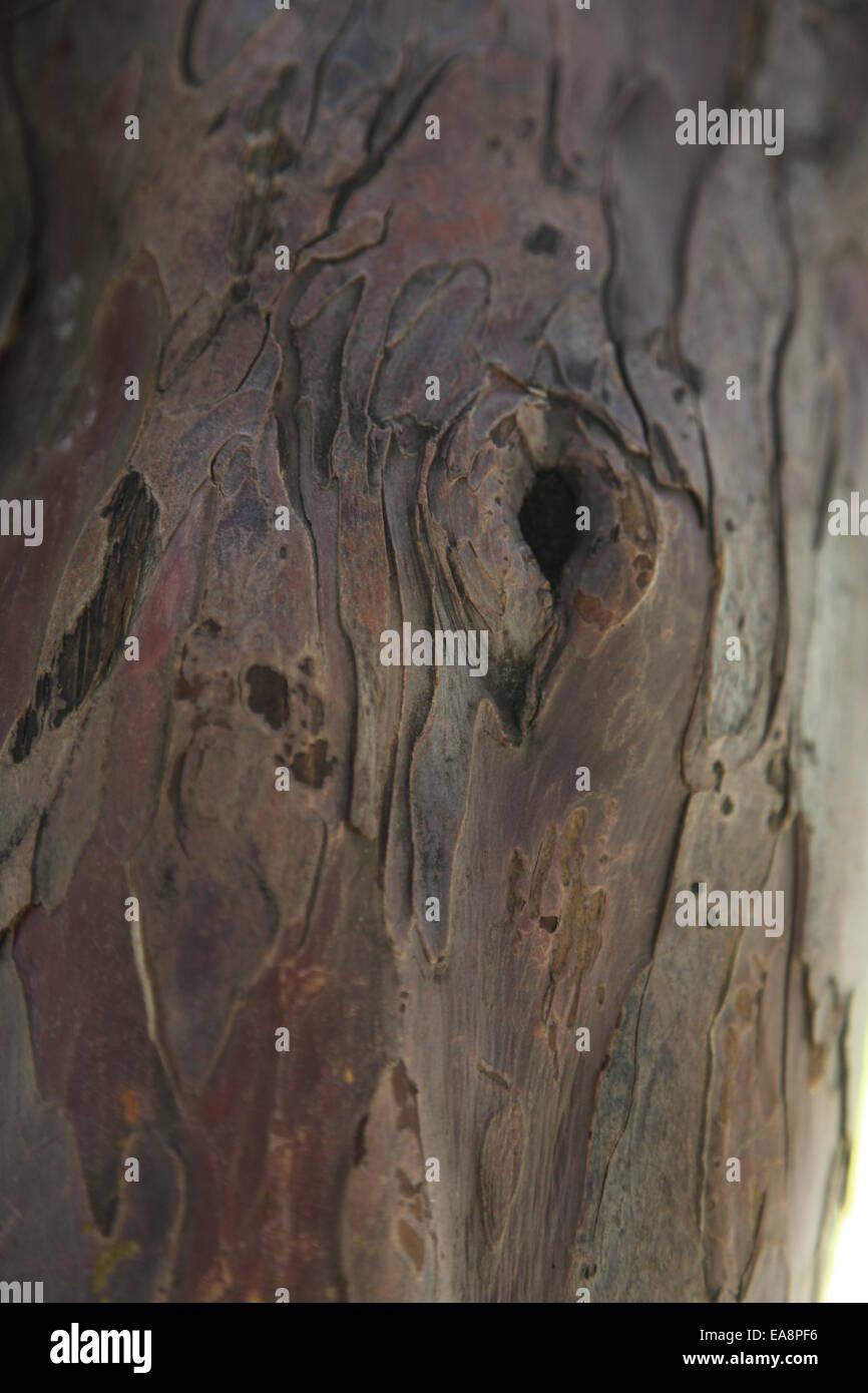 Abstract Sfondo legno Immagini Stock