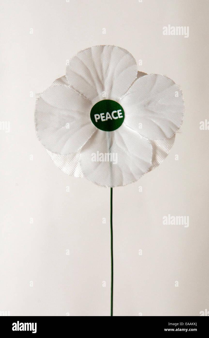 Bianco di papavero di pace contro uno sfondo bianco Immagini Stock