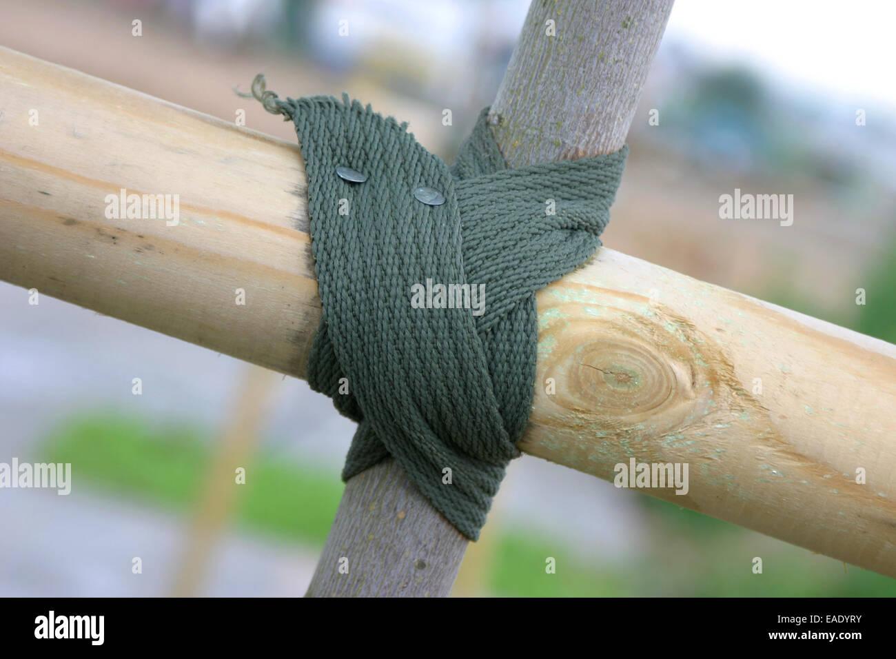 Close up sui legami nodo ad albero Immagini Stock