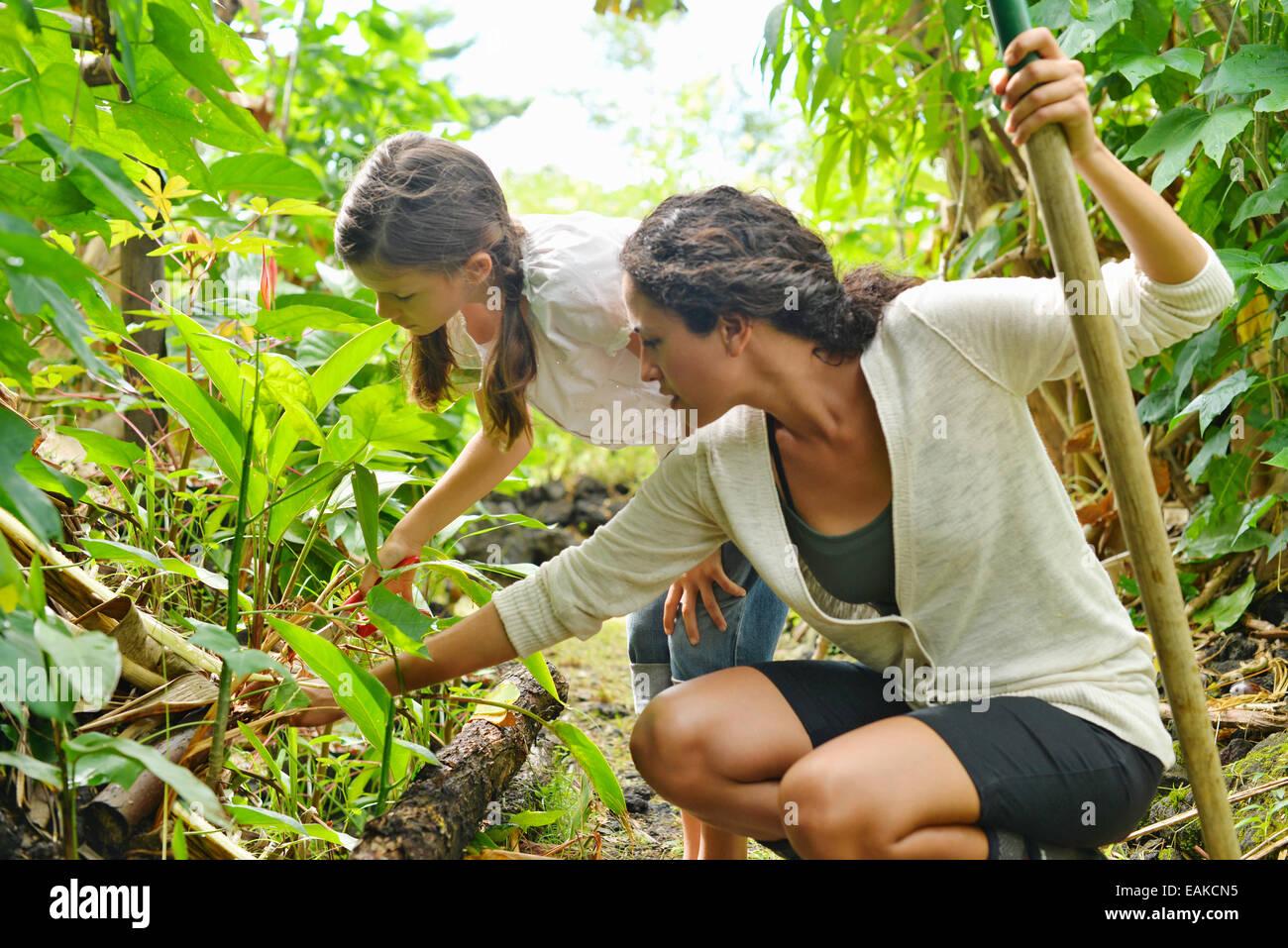 Donna e bambina ispezione di piante in giardino Immagini Stock
