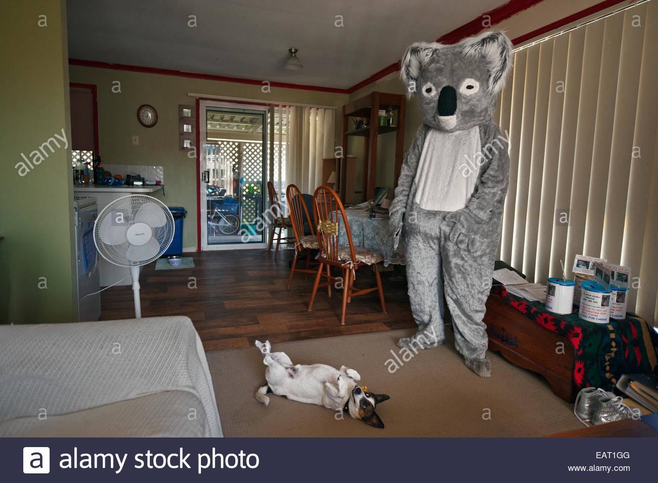 Un volontario che indossa una tuta koala in occasione di manifestazioni pubbliche di sensibilizzazione. Foto Stock