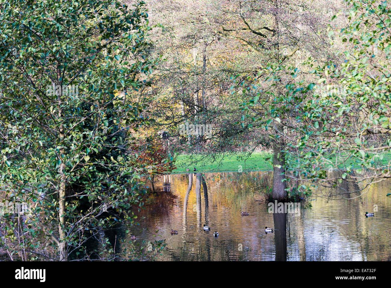 Riflessi di colori autunnali in un campo inondato dal fiume Derwent vicino a Hathersage Derbyshire England Regno Immagini Stock