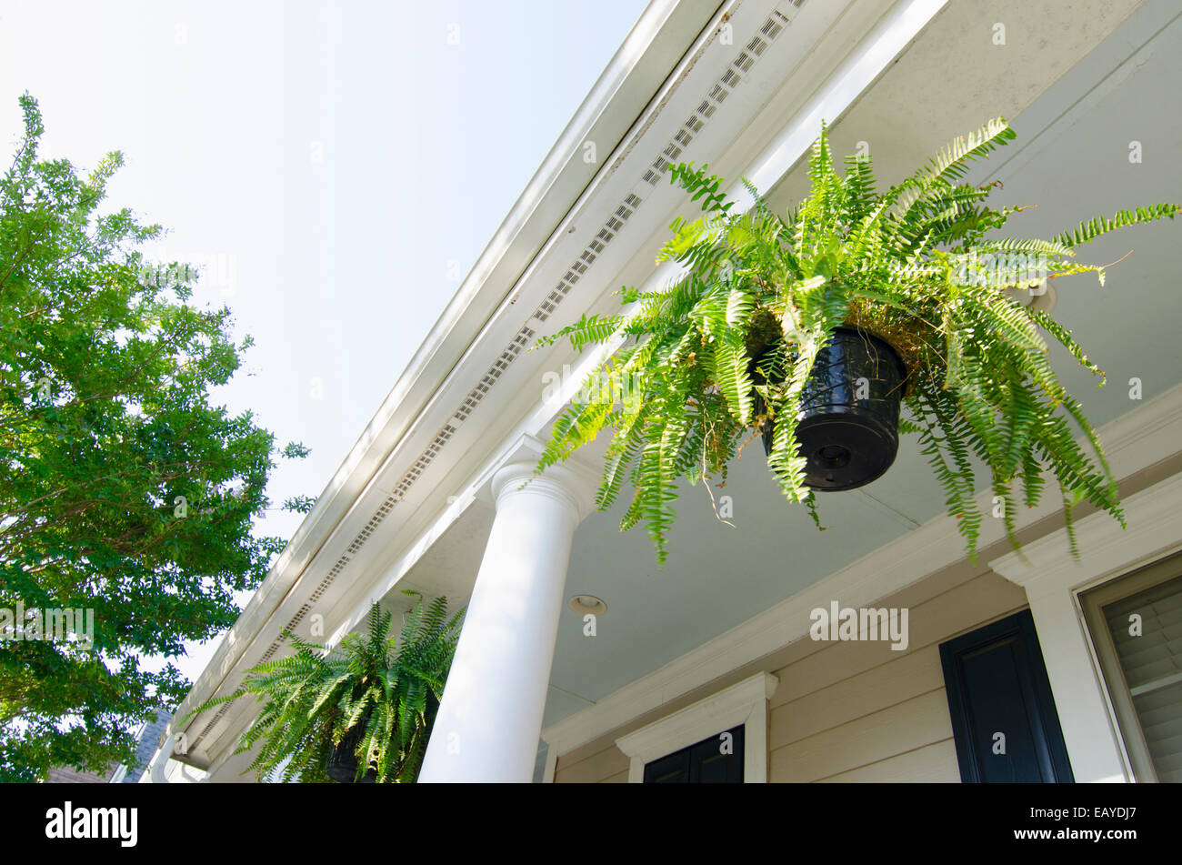 Hanging ferns porch immagini hanging ferns porch fotos for Disegni di portico anteriore georgiano