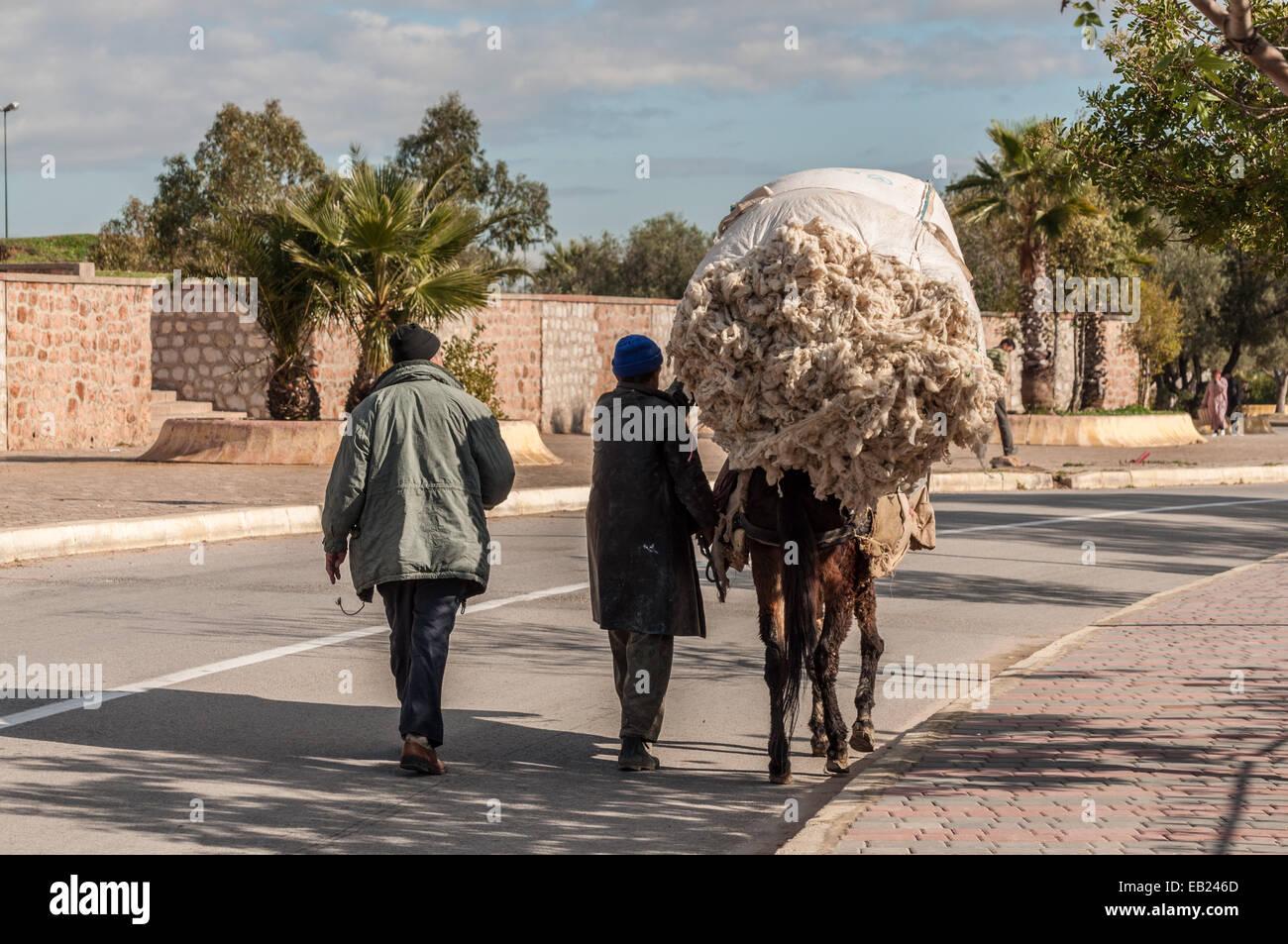 Asino - un tipico dei mezzi di trasporto in Marocco Immagini Stock