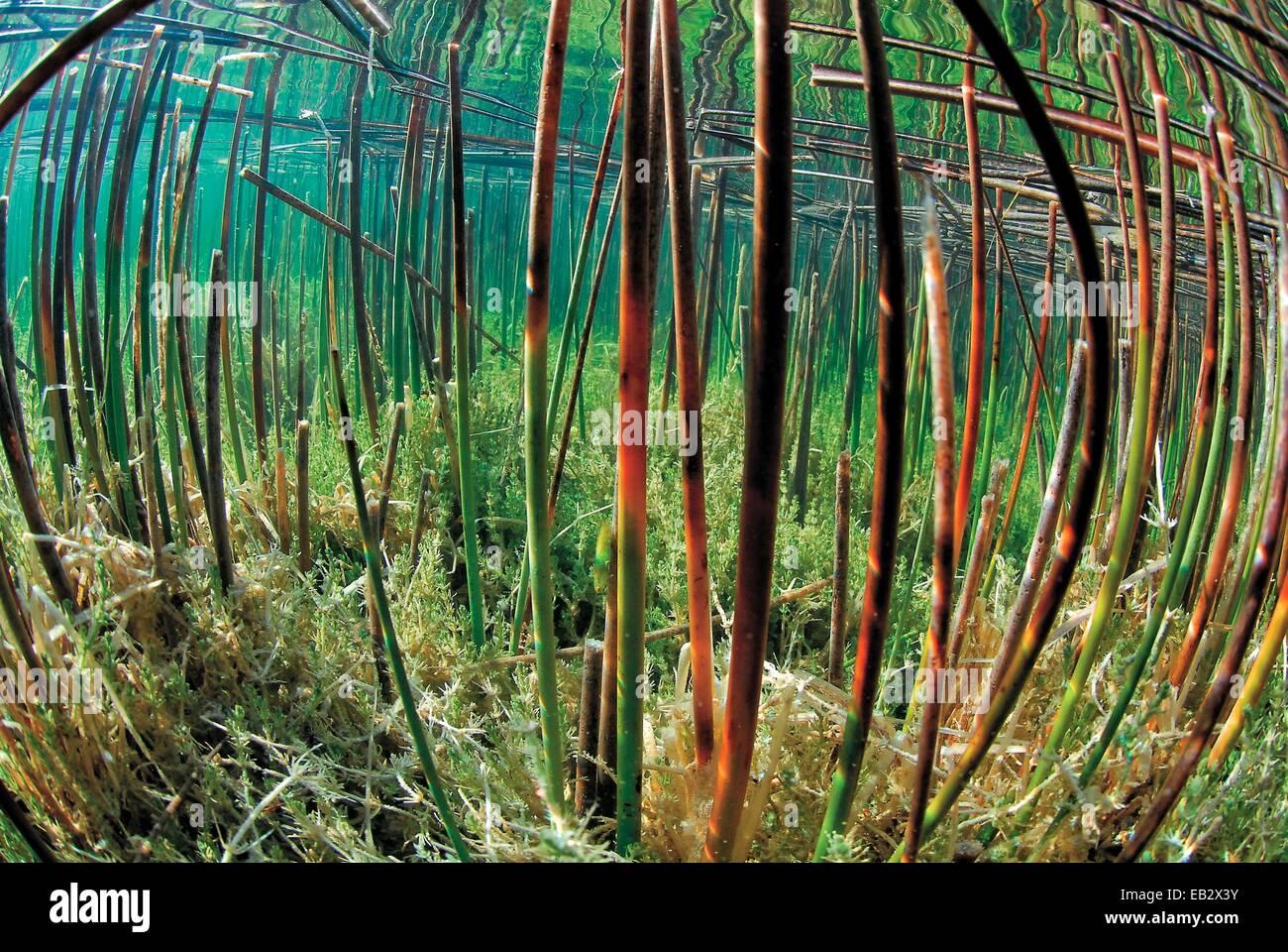 Vista subacquea di balsa del Algarve. Immagini Stock