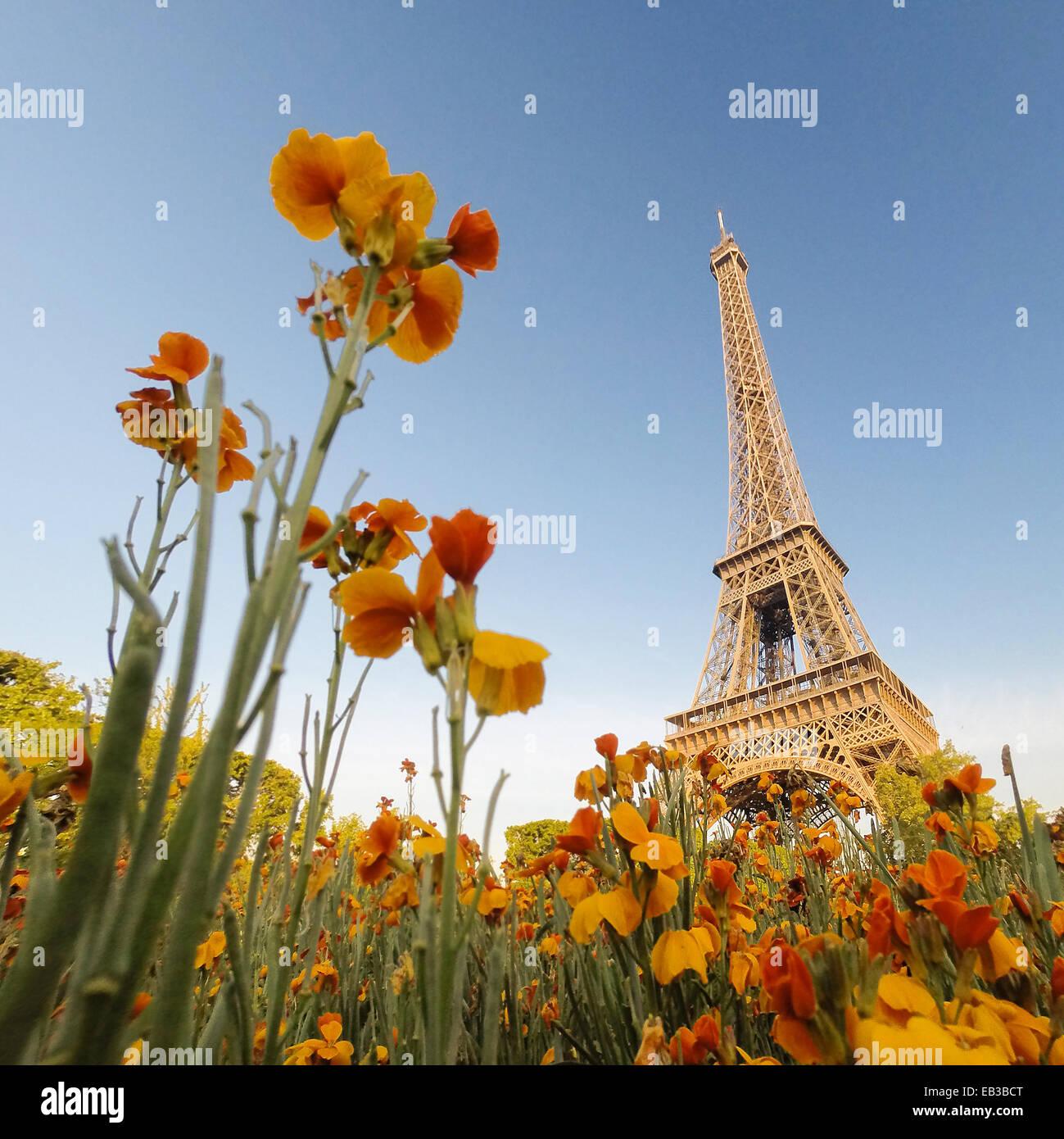 Torre Eiffel visto attraverso i fiori, Parigi, Francia Immagini Stock