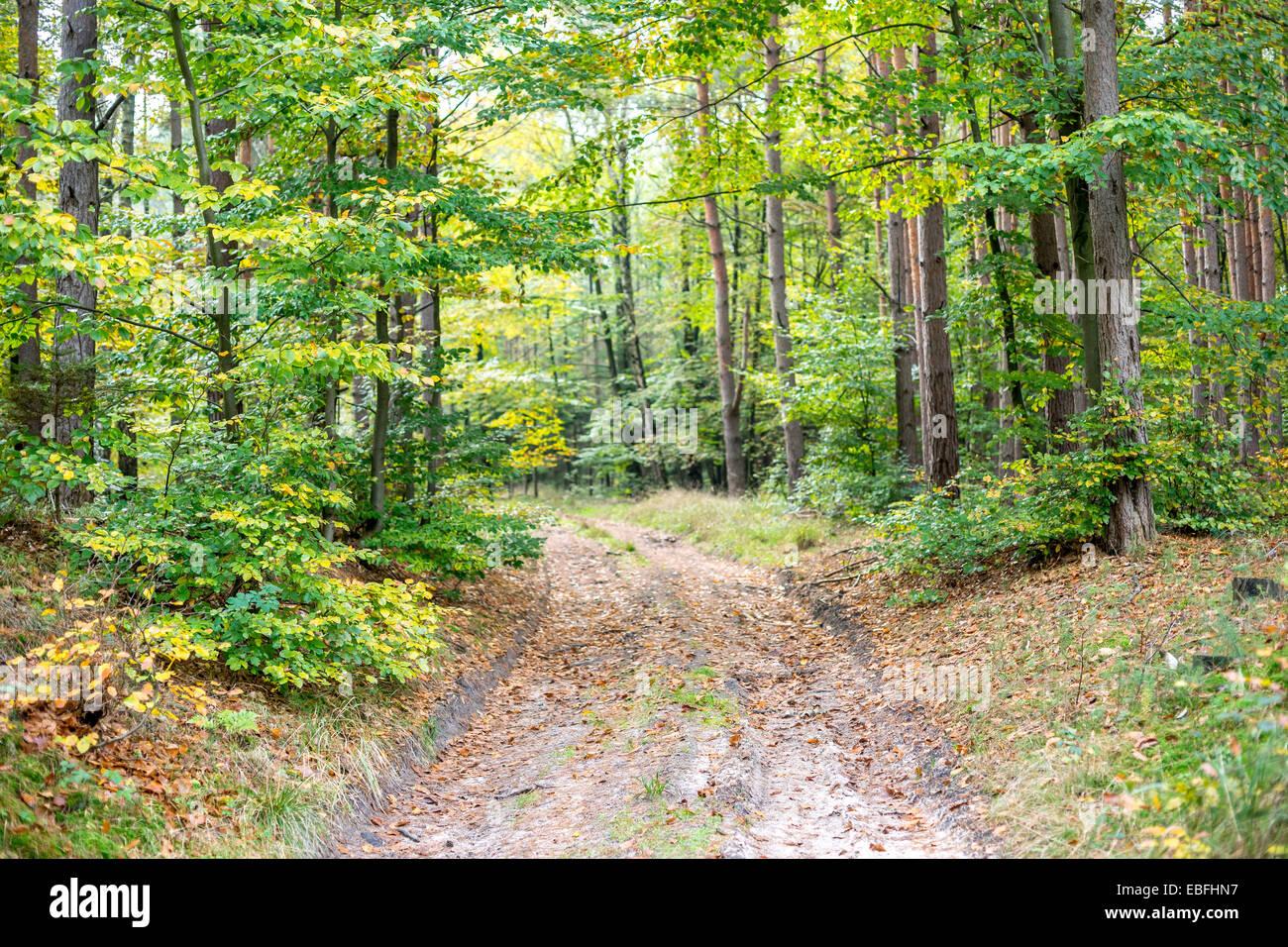Corsia in Europa settentrionale della foresta di autunno Immagini Stock