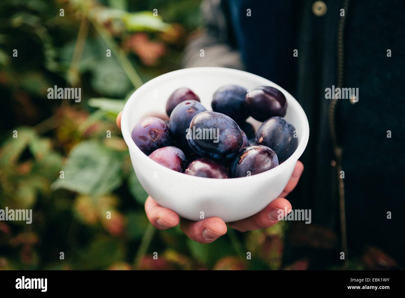 Persona in possesso di tazza di prugne fresche Immagini Stock