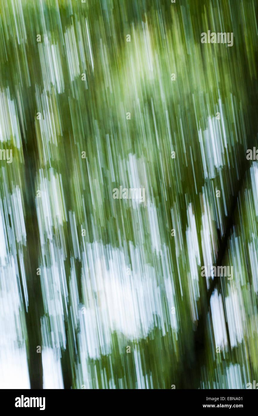 Motion Blur vista astratta di alberi Foto Stock