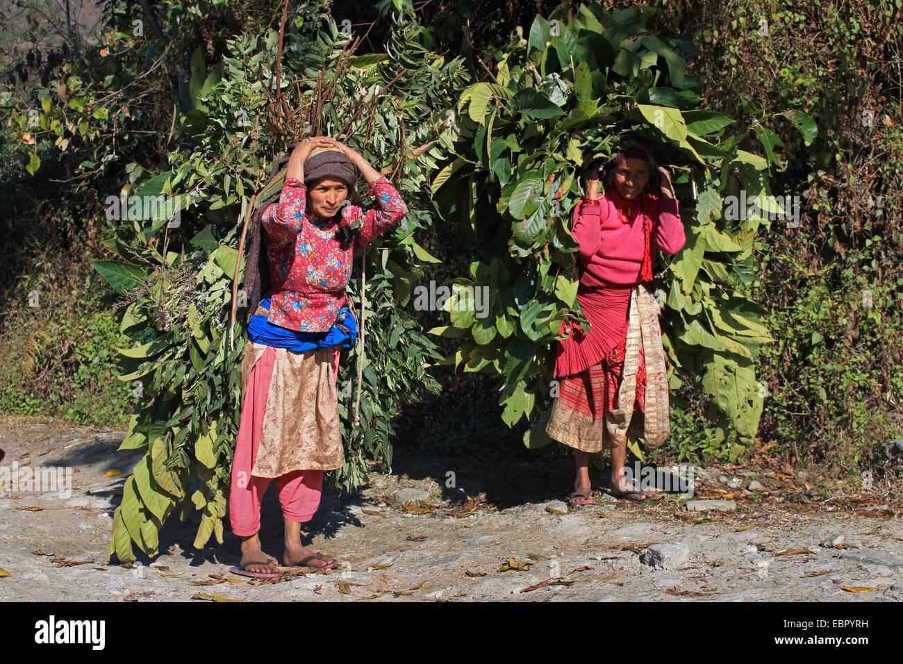 Le donne che trasportano un sacco di mangime per il cattles domestici, Nepal, Kathmandutal, Pokhara Immagini Stock