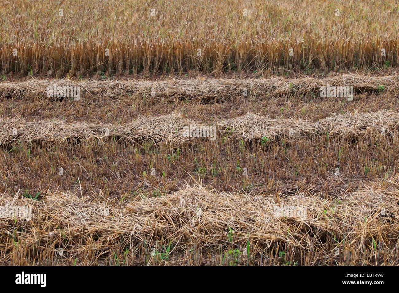 In parte raccolte grainfield, Germania Immagini Stock