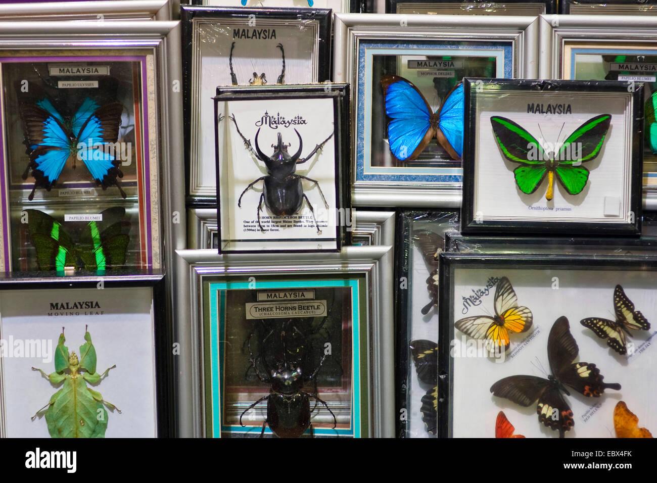 Farfalle e altri insetti per la vendita, l'Aeroporto di Kuala Lumpur, Malesia Immagini Stock