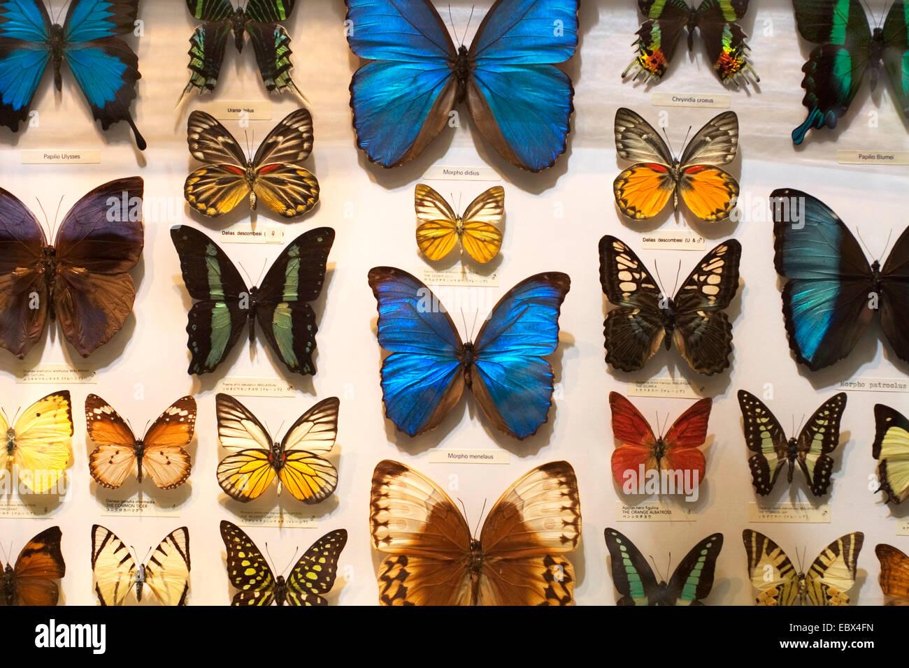 Farfalle per la vendita, l'Aeroporto di Kuala Lumpur, Malesia Immagini Stock