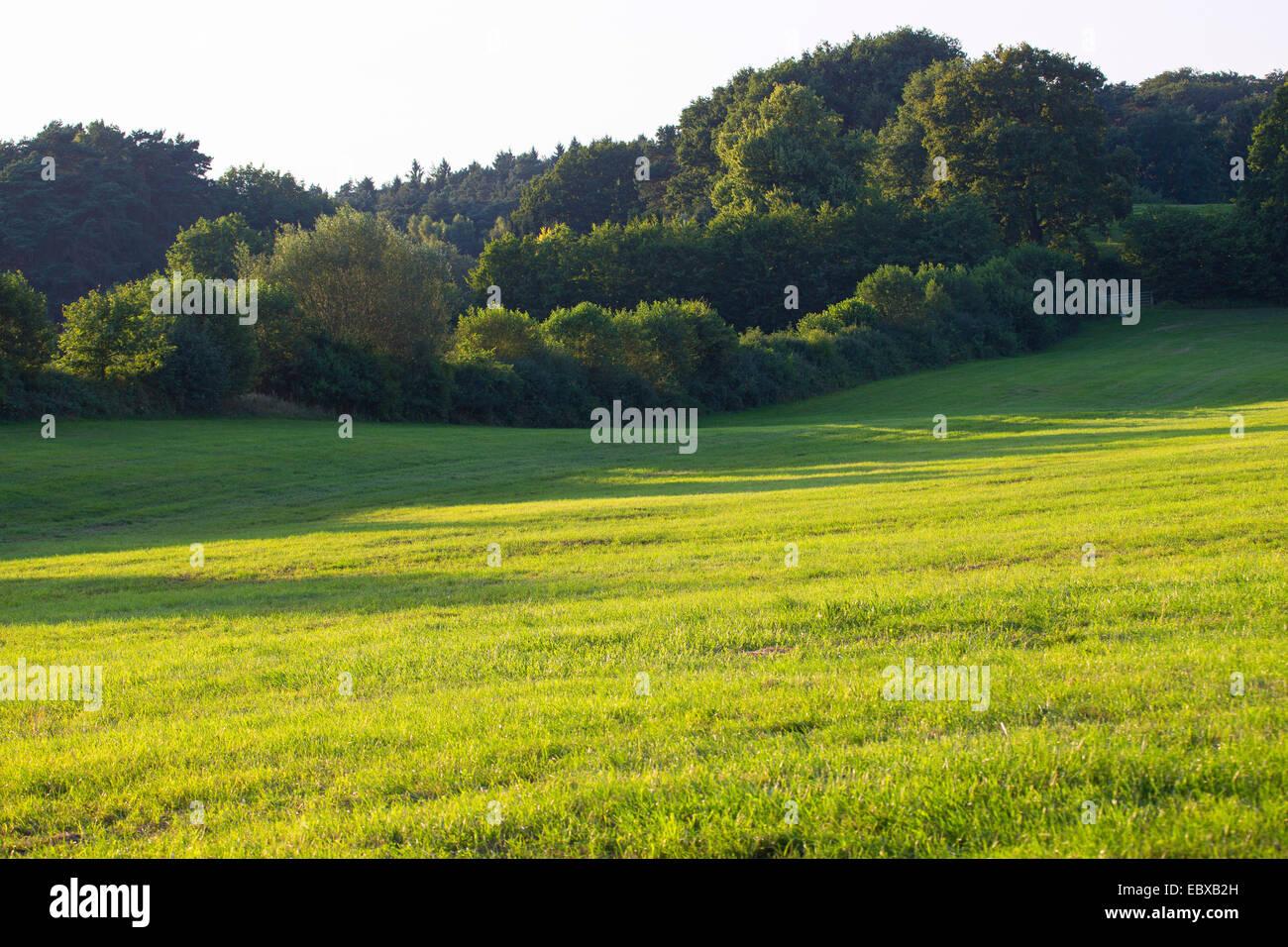 Pascoli con hedge banche, Germania, Schleswig-Holstein Immagini Stock
