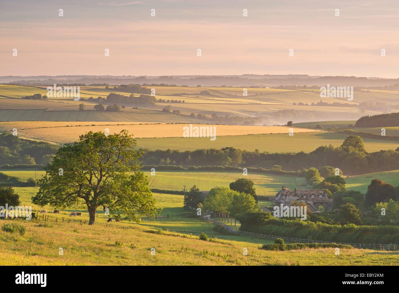 Campagna di laminazione e cottage con tetto in paglia vicino a Frome, Somerset, Inghilterra. Per il periodo estivo Foto Stock
