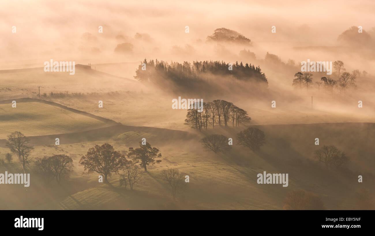 Nebbia copriva campagna di laminazione all'alba, Lake District, Cumbria, Inghilterra. In autunno (Novembre) Immagini Stock