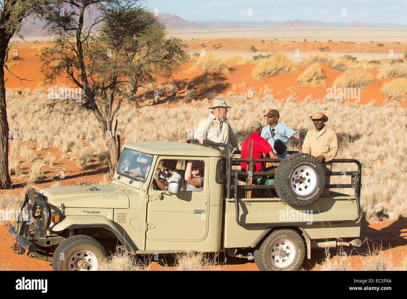 Africa, Namibia. Tok Tokkie percorsi escursioni e osservazione degli animali selvatici nel carrello. Modello rilasciato. Immagini Stock