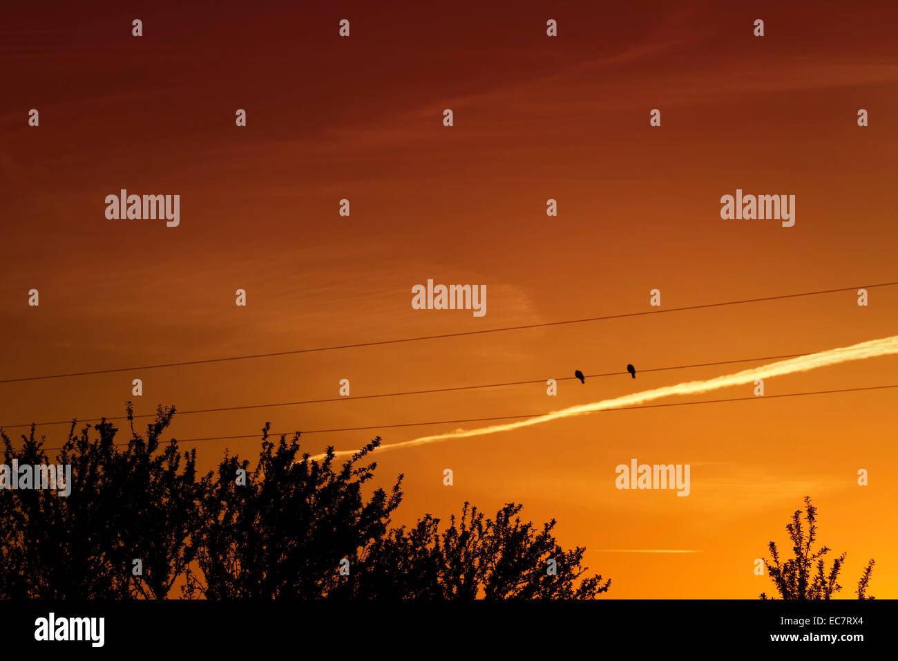 Gli uccelli in un filo al tramonto Immagini Stock