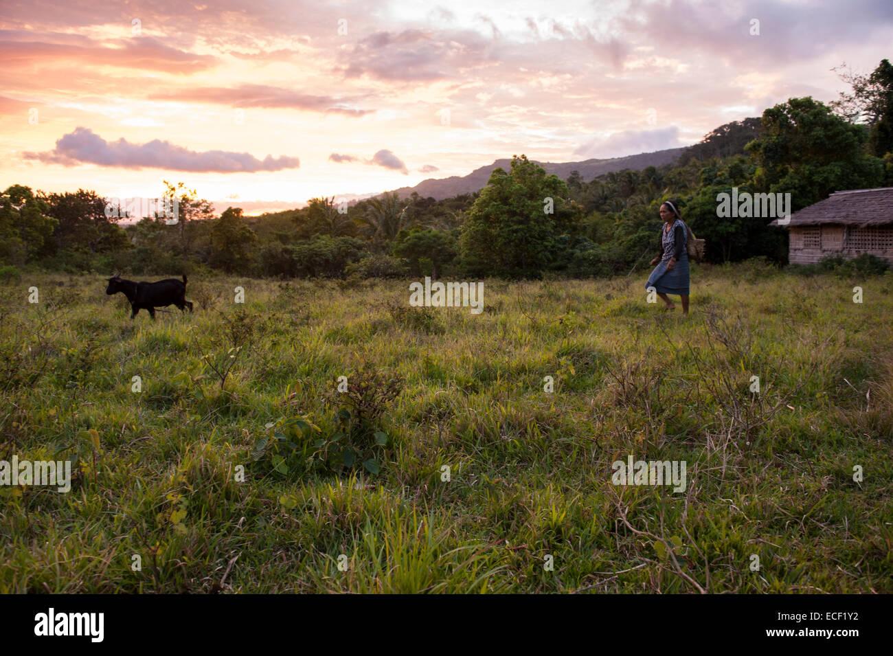 Una donna Mangyan spostando il suo capre Immagini Stock