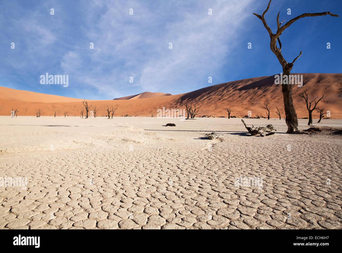 Gli alberi morti e la terra arida, Deadvlei, Sossusvlei, Namibia Immagini Stock